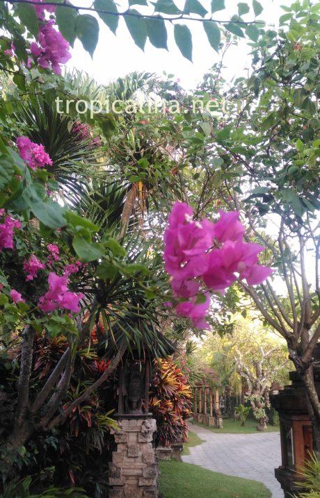 バリ島サヌール タンジュンサリホテルのお庭